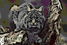 lynx art - Yahoo Canada Image Search Results