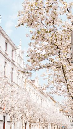 A cherry blossom wallpaper you can use to brighten up your phone. Shot in the beautiful city Bonn, in Germany. City Aesthetic, Flower Aesthetic, Travel Aesthetic, Spring Aesthetic, Iphone Background Wallpaper, Scenery Wallpaper, Nature Wallpaper, Aesthetic Backgrounds, Aesthetic Iphone Wallpaper