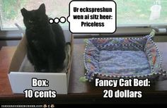 It's the simple things that are often the most fun #humor #cats