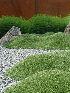 Cushion Bolax (Azorella trifurcata)