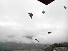 Temps couvert et ballet des hirondelles devant nos fenêtres...