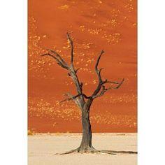 Dead tree sand dunes Deadvlei Namib-Naukluft National Park Namibia Canvas Art - David Wall DanitaDelimont (12 x 17)