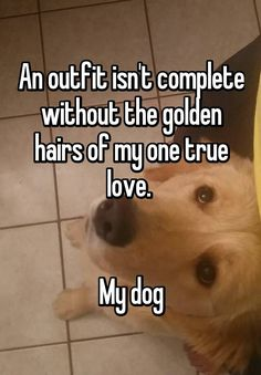 """An outfit isn't complete without the golden hairs of my one true love.    My dog"""