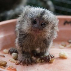 The top 25 cutest baby animals! What a little munchkin