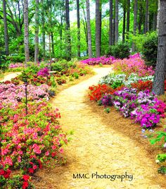 Enchanted Pathway by MMCPhotographyShop on Etsy