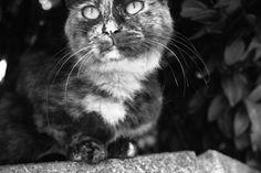 Beard of cat