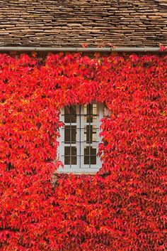 The mountain village of Papingo in northern Greece shows off an unexpected side of the Mediterranean country. Through The Window, Color Of Life, Windows And Doors, Autumn Leaves, Vermont, Cool Photos, Amazing Photos, Beautiful Pictures, Beautiful Places