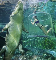 Cage Diving With A Gigantic Crocodile in Darwin Australia