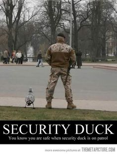 Roman legions used to use ducks to guard their perimeters.  Because nothing gets past a duck. . . Nothing.  Guard ducks.