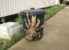 Coconut crab. I'll never complain about raccoons getting into my garbage again.