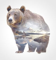 Double-Exposure Animal Portraits By #WhatWeDo Animals embody their environment – literally so where Faunascapes are concerned. These are double exposure paintings of animals and their native landscapes. They're reminiscent of nature atlas illustrations.