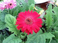 Fotos De Puerto Rico | Foto Blog Puerto Rico: Fotos de Flores con mi Celular