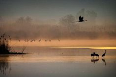 Migrating Cranes flocking at the Hula Lake conservation area, north of the Sea of Galilee, in northe... - Oded Balilty/AP