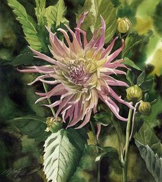 Buy September dahlia, Watercolor by Alfred Ng on Artfinder. Discover thousands of other original paintings, prints, sculptures and photography from independent artists. Watercolor And Ink, Watercolor Flowers, Watercolor Paintings, Watercolours, Autumn Painting, China Painting, Flower Shape, Flower Art, Paintings For Sale