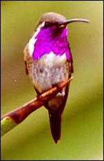 Texas Parks and Wildlife site-Hummingbird info