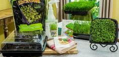 The beauty of growing micro greens and wheatgrass is that you can do it indoors and harvest your crop 10 to 14 days later! You don't need an official garden plot, just a few planting flats… Container Gardening Vegetables, Vegetable Garden, Home And Family Hallmark, Wheat Grass, Diy Garden Decor, Garden Ideas, Edible Garden, Get Healthy, Healthy Foods