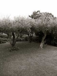 Ultimissime dall\'orto: la Palma di Goethe dell\'Orto Botanico di ...