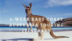 Touring the East Coast of Australia is one of the most popular drives in the country. This complete touring guide details the entire self-drive route. Coast Australia, Self Driving, I Want To Travel, East Coast, Touring, Animals, Animales, Animaux, Animal