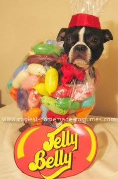 A Bag of Jelly Belly Jelly Beans Dog Costume... This website is the & 158 best Pet Halloween Costumes images on Pinterest | Homemade ...