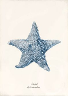 Blue Coral Art Print Lophaster Stellanis by 1001treasures