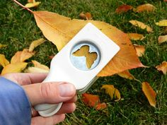 Whatt? Paper Punching Leaves. The possibilities are endless!  Be sure to dry before using.