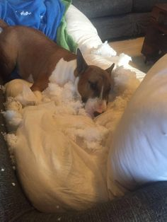 Your pillow just exploded, thank goodness I'am still ok.