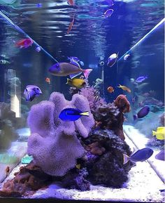 Meerwasser Along with publications and festivals, there are regular beer brewing competitions you ca Coral Reef Aquarium, Aquarium Setup, Glass Aquarium, Marine Aquarium, Saltwater Aquarium, Freshwater Aquarium, Aquarium Fish, Fresh Water Tank, Salt And Water