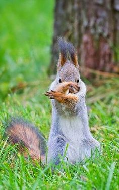morning exercise - tai chi for squirrels