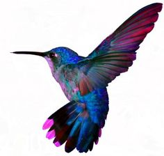 Blue and purple in flight | Birds