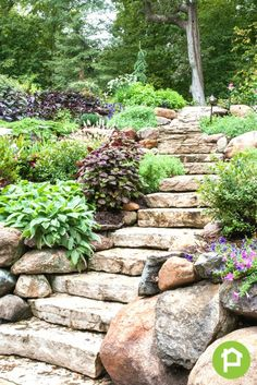 47 Gorgeous Perennial Garden Ideas If you have a stone walkway or steps you may consider letting some of your perennial bushes and flowers grow wild alongside these areas. It helps increase the rustic and naturalistic appeal of the area. Stone Landscaping, Landscaping With Rocks, Garden Landscaping, Landscaping Ideas, Steep Hillside Landscaping, Inexpensive Landscaping, Landscaping Software, Hillside Garden, Garden Paths