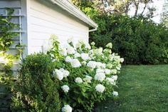 The front bed has an Endless Summer hydrangea and a climbing clematis. We planted a mature boxwood on the corner for some winter color, and a hedge of Limelight hydrangea along the side.