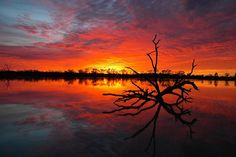 Sunrise from the banks of Yatco Lagoon on the River Murray in South Australia.