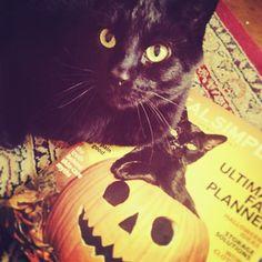 My beautiful black cat