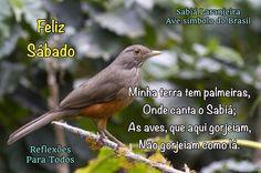 """Acesse o poema """"Canção do Exílio"""", com link para vídeo de sabiá cantando. #felizsabado #animais #poema"""