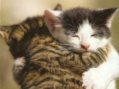Interesting article about how to communicate with your cat and understand how they see things. And it has an aww inducing cute kitten hug. :)