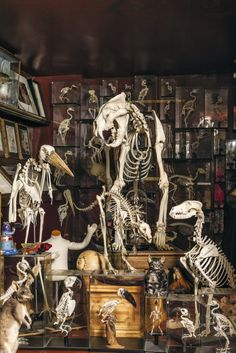 In pictures: The Viktor Wynd Museum of Curiosities – Now. Here. This. – Time Out…