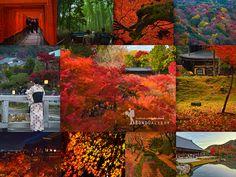 """""""แม้มีคนบอก Tokyo นั้นไม่มีขา แต่ผมว่า ยังมีอีกเมืองที่น่าค้นหา หากมีเวลา อยากให้ลองเดินชิลล์ๆ ช้าๆ แล้วจะหลงเสน่ห์เมืองเก่าที่ชื่อว่า....Kyoto"""" —Kyoto..Let's g"""