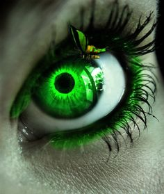 Beautiful colorful pictures and Gifs: Butterfly Pictures-Mariposas Gorgeous Eyes, Pretty Eyes, Cool Eyes, Butterfly Eyes, Green Butterfly, Eyes Artwork, Eye Pictures, Colorful Pictures, Photos Of Eyes