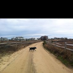 My best friends going for a run on Nantucket