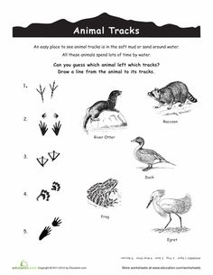 Animal Tracks   Animal Tracks, Track and Animals