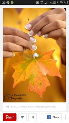 Fall Theme Pictures