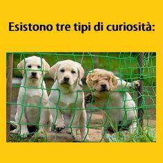 #tmlplanet #cani #animali