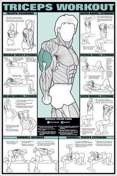 trainingsplan muskelaufbau Biceps and Forearm Professional Fitness Workout Wall Chart Poster - Fitnus Posters Inc – Sports Poster Warehouse Gym Workout Tips, Weight Training Workouts, Ab Workout At Home, Workout Challenge, Fun Workouts, At Home Workouts, Wall Workout, Gym Workout Chart, Arm Workout Men