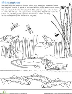 Earth Day Second Grade Nature Life Science Worksheets: Color the Freshwater Habitat Animal Worksheets, Science Worksheets, Science Lessons, Teaching Science, Life Science, Kids Worksheets, Science Fun, Phonics Activities, Stem Activities