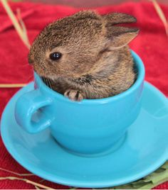 Cute Pictures: Tiny Animals in Teacups - Life - Stylist Magazine