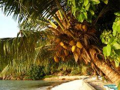 Archipelag Praslin/ L'Archipel Praslin Seychelles