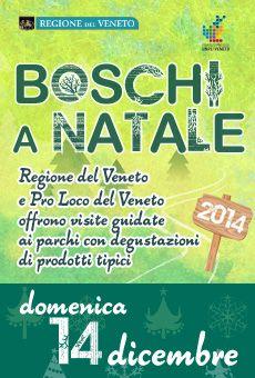 Boschi a Natale 2014 - Visite guidate nei Parchi Regionali - domenica 14 dicembre 2014