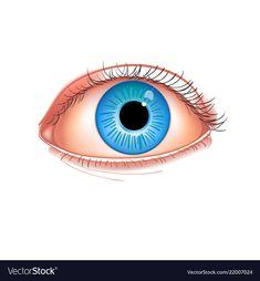 Realistic human eye close-up human eye blue Vector Image Senses Activities, Preschool Activities, Human Eye, Human Body, Bingo, Eyes Clipart, Body Parts Preschool, Eye Images, Eye Close Up