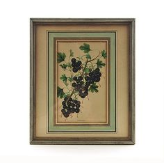 Antique Wall Art Framed Crandall Black Currant by Prestele Chromolithograph Color Plate U.S. Dept of Agriculture 1889.