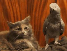 katten gif - Google zoeken